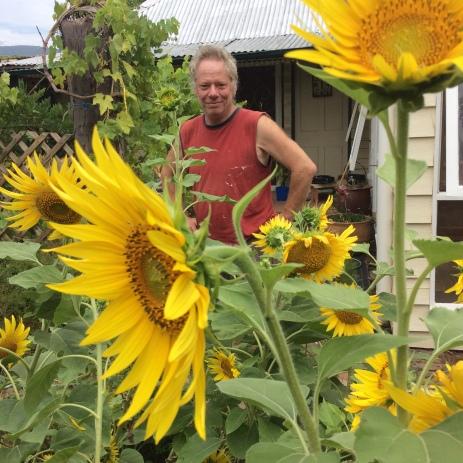 Sunflower crop Mudgee 2017